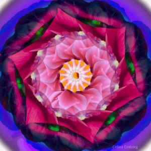 imagenes-de-mandalas-con-rosas