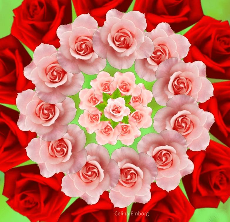 mandala-de-rosas